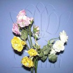 baby_rose