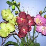 orquidea_phaleonopsis