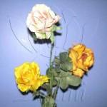 rosa_individual